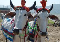 Fair and Festivals of Himachal Pradesh